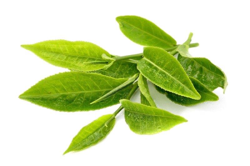 Hampstead Tea BIO zelený čaj 250ks | Fair Made - spravedlivé nakupování